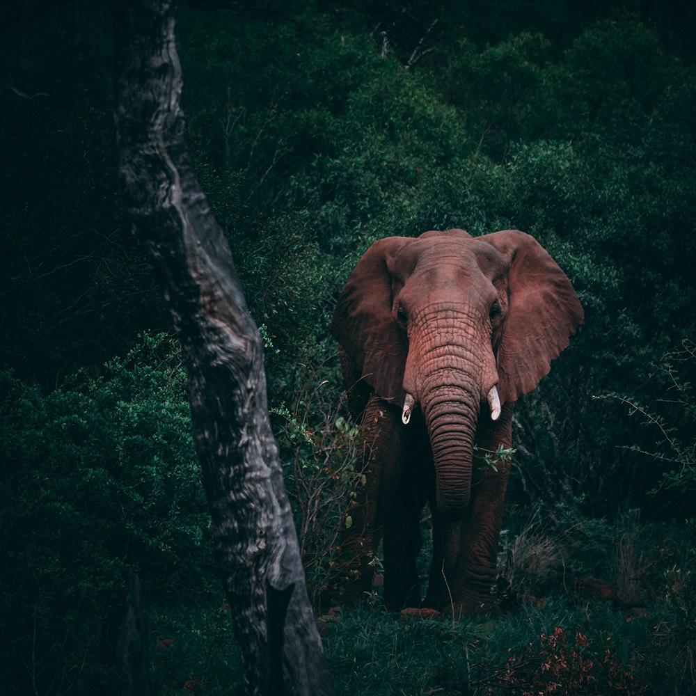 Elefante envolvido na natureza